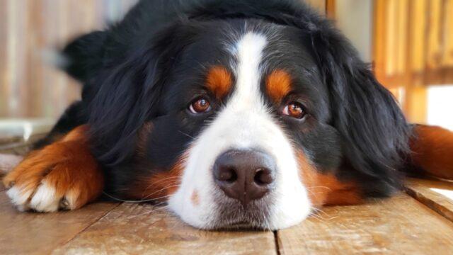 犬の顔の写真