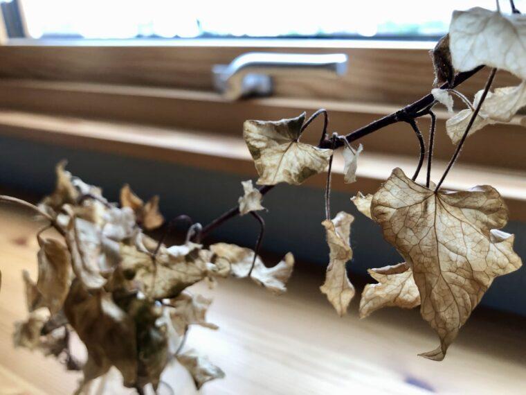 スウェーデンハウスの窓と枯れ葉
